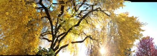 photo 5 (5)